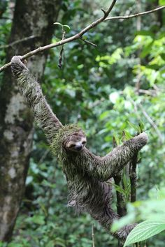 3 toed sloth Photo by Theresa Lord -- National Geographic Your Shot