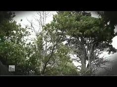 Watch Prospectors - Season 3 Episode 2 Full Episode - YouTube