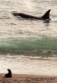 Puerto Madryn . Chubut . Argentina