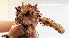 15 Wet Cats Who Will Never Forgive You