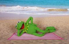 Kermit on a beach
