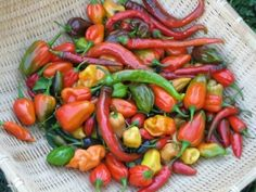 Hot Peppers Mixed