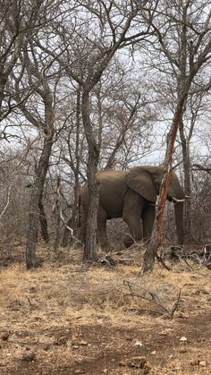 Best Places in South America Elephant Gif, Elephant Canvas, Elephant Love, African Elephant, Elephant Videos, Elephant Photography, Wildlife Photography, Animal Photography, South America Map