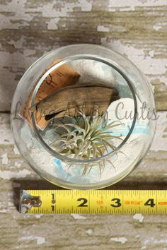 I love being with nature and this Beach Bowl is the perfect way to enjoy the look of the beach in your home. A nice tropical display that is sure to look great anywhere with an easy to care for Tillandsia!   Beach Bowl Contains- Ionantha Tillandsia Air Plant, White Sand, Sand Dollar, Recycled Cork, Alaskan Driftwood, Blue and Clear Colored Glass pieces and a Starfish.  Glass Bowl is 3.5 inches in diameter.  If you are new to the Tillandsia World they are also known as Air Plants.. In Nature…
