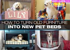 DIY Pet Beds from Old Furniture - http://diyforlife.com/diy-pet-beds-old-furniture/ - #Diy, #DogBeds, #PetBeds