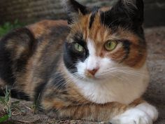 Should You get Health Insurance for your Pet? #Cat www.gopetplan.com/cat-insurance