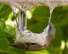 Committee Against Bird Slaughter (CABS) | Komitee gegen den Vogelmord e. V.