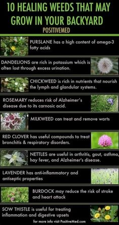 10 Healing Herbs That May Be Growing In Your Backyard