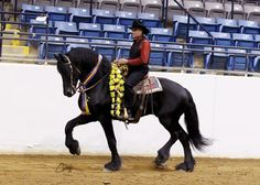 Western Dressage Association® of America even drafts can do it :)