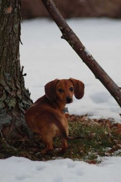 Some days I really miss my old dog Lucy.  I'll get a dachshund some day, but it will never replace Lucy.