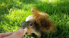 Cute Squirrel Eating From Hand (4K) https://www.youtube.com/watch?v=-qdCq0yYssM
