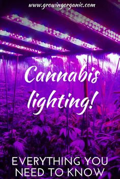 Here's how to find the best cannabis lighting for your homegrown hemp!