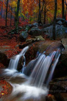 *Autumn - Montseny (by Gallego Caldas Jordi)