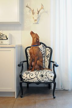 dog (pets on furniture) (via desire to inspire)