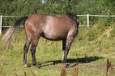hedless horses - Google Search