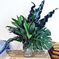 Keeping it simple | Sydney | Florist | Flower Arrangements| MyFlowerMan | Bassike | Australia
