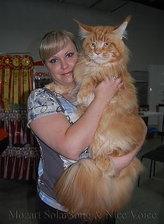 OMG!! Back away from Meow Mix!!! What a BIG Boy!!  His head is as big as hers!!!