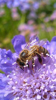 bee working! Nice job!