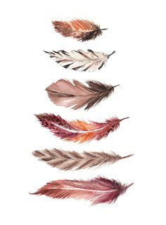 Bohemian Feathers Art Print by Casey Saccomanno | Society6