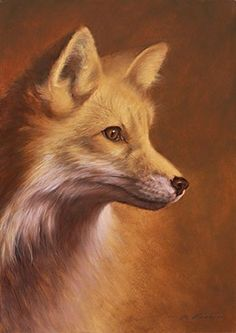 Portrait of a Red Fox - Wildlife by Phyllis Frazier Wildlife Paintings, Wildlife Art, Animal Paintings, Animal Drawings, Vida Animal, Mundo Animal, Most Beautiful Animals, Beautiful Creatures, Fuchs Baby