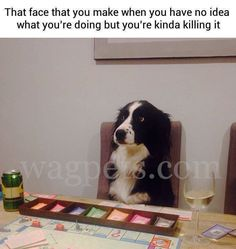 That face that you make when you have no idea what you're doing but you're kinda killing it Dog Memes, Dankest Memes, Funny Memes, Hilarious, Animal Memes, Funny Animals, Happy Dogs, Best Memes, Funny Posts