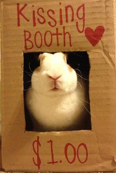 Every bunny has to make a living