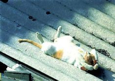 The 25 Most Awkward Cat Sleeping Positions. I must say my cat's favorite is the sunbather one. I Love Cats, Cute Cats, Funny Cats, Funny Animals, Cute Animals, Funny Cat Photos, Hilarious Pictures, Lazy Cat, Cat Sleeping