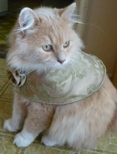 Pet Evening Cape Olive Brocade by ScotsPlace on Etsy, $18.00