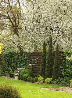 Mam wrażenie że w moim ogrodzie w ciągu ostatnich dni wiosna eksplodowała i