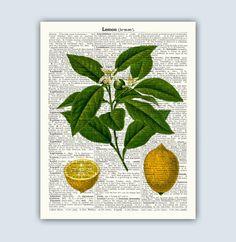 Lemon Poster Botanical Print Fruit Art Kitchen Art by DicosLand Kitchen Artwork, Kitchen Posters, Kitchen Prints, Kitchen Decor, Lemon Art, Dictionary Art, Fruit Print, Old Maps, Botanical Prints