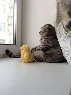 Cat staring out window with stuffed animal