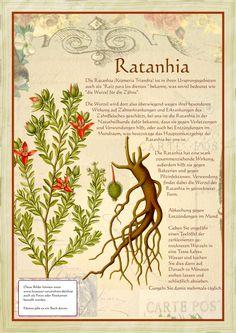 Ratanhia