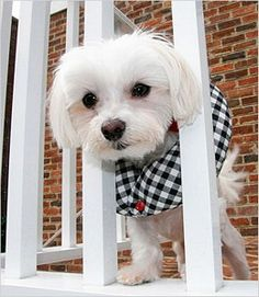 Puppy Bumper to prevent small breeds from stepping through fences, and balcony railings.