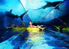 Hotel Atlantis The Palm Under Water Dubai