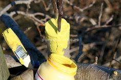 La final, toate rănile se sigilează cu o vopsea pe bază de ulei.