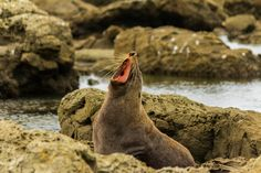 Take the plunge with fur seals in Kaikoura, New Zealand. Image by Anup Shah / CC BY-SA 2.0