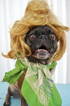 Drag Queen Pug a retro Puggy dream #pug