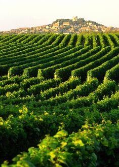 #Sancerre, France #vineyards