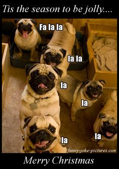 Funny Singing Christmas Pugs Joke Picture | Funny Joke Pictures