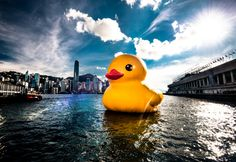 500px / Rubber Duck ap Hong Kong by Scott Man