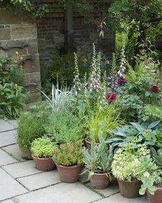 Back Gardens, Small Gardens, Outdoor Gardens, Small Courtyard Gardens, Modern Gardens, Formal Gardens, Garden Cottage, Garden Sofa, Balcony Garden