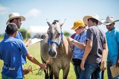 Take a behind-the-scenes look at how the group provided care to more than 300 working equids in Southern Honduras.
