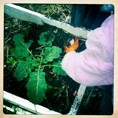 What to plant with the kids this winter in the garden. Vegies, mushrooms, fruit trees.