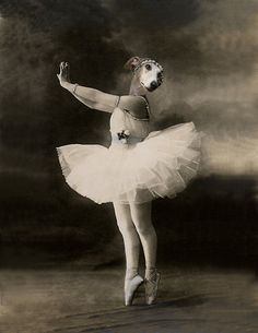 Pearl Vintage Dog 8.5x11 Print Ballerina Altered by AnimalFancy