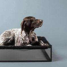 Dog Milk - Beds & Furniture on Pinterest | Modern dog beds, Modern dog ...
