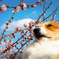 Pin for Later: 11 Times Erico Bear the Corgi Was Actually You When your friend tells you to look candid for a photo.