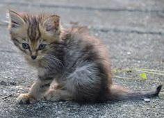 「猫の親子 画像」の画像検索結果