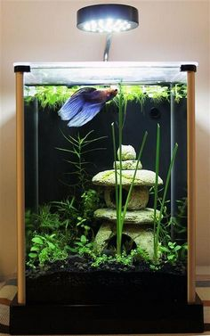 42 Astonishing Aquarium Design Ideas For Indoor Decorations - An aquarium is an enclosure with at least one clear side that houses water-dwelling fish, plants and other livestock and decorations. An aquarium offe. Planted Aquarium, Aquarium Aquascape, Betta Aquarium, Aquarium Setup, Aquarium Design, Aquascaping, Tropical Fish Aquarium, Tropical Fish Tanks, Betta Fish Tank
