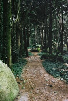 franciscan-pantheist:  hidinginthewoods:  I'd love to get lost somewhere like this  In a place like this, you're more likely to lose the world, and find yourself…