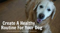 Do you have a routine for your dog? Did you know that dogs thrive on routines? It is important to orient your dog to a healthy routine. Keep in mind to be consistent and provide proper guidance when creating a healthy routine.